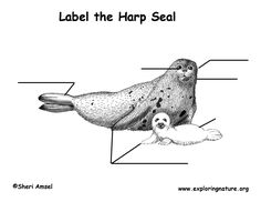 diagrams of harp seals google search science projects rh pinterest com