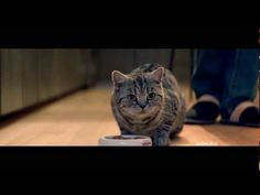 Are you sick of the cute cat approach in every single catfood commercial as well? Then this commercial is definitely something for you. A whole new and very cool approach, beautifully filmed as well.
