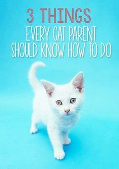 Cats are generally easy to care for. Besides their adorably quirky nature and their distinct personalities, it's one of the many reasons they make wonderful companions! Sure, you've mastered keeping the litter box clean, feeding a high quality diet and providing fresh water at all times, but there are a few more (less fun) things that your cat needs you to know. Read on as eBay shares three very important basics that all cat parents should know.