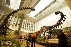 The Carnegie Museum of Natural History (left) and the Carrie Furnaces (inset) at the Rivers of Steel National Heritage Area are among the cultural and historical attractions in Pittsburgh. Visit Pittsburgh, Pittsburgh City, Carnegie Museum, Carnegie Library, Ohio River, Best Cities, Natural History, Day Trips, Great Places
