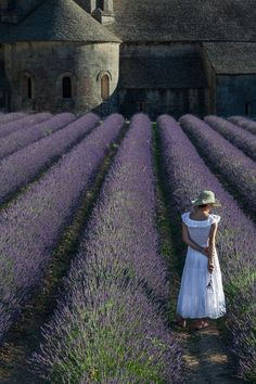 Book your train tickets to Provence now and enjoy our exclusive Parner offers. All you need to organise a trip to Provence. Lavender Blue, Lavender Fields, Lavander, Beautiful World, Beautiful Places, Beautiful Beautiful, Places To Travel, Places To Visit, Travel Destinations