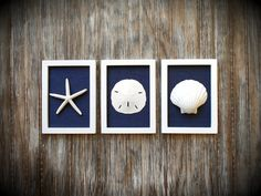 This set of three nautical decor frames is 5 3/4 x 7 3/4 inch each (measuring each outside dimensions) and would be a lovely addition to your home whether hung on the wall or lean on a mantel. Great for your seaside bathroom decor! Each lovely sea shell is a different size and shape as you would find in the natural. Each frame is a matte white and then I added s gorgeous dark navy blue burlap for interest and texture. I love this set for its simplicity. This coastal cottage chic sty...