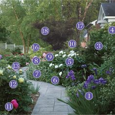 Plants for an Inviting Front-Yard Pathway: Plant Identification - FineGardening - Gorgeous garden path garden design with plant identification.