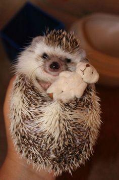 adorable hedgehog holding its tiny teddy bear