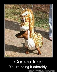 I have a thing for Giraffe camo