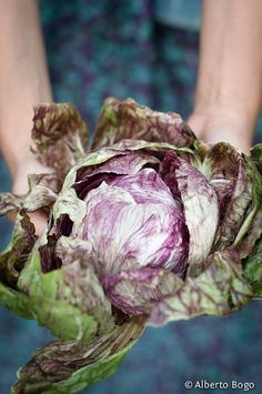EAT HEALTHY Cabbage