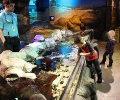 Legoland Discovery Center Michigan and Sea Life Aquarium - Kiddo Korner Birthday Party Places, 10th Birthday Parties, 10 Birthday, Birthday Ideas, Fun Activities, Kindergarten Activities, Preschool, Party Places For Kids, Summer Fun