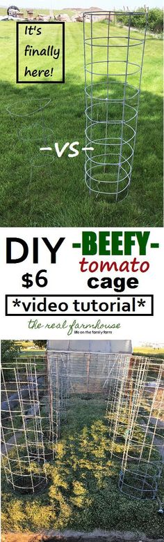 DIY BEEFY tomato cage for only $6, video tutorial, and it will last FOREVER