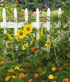 How to Grow a Flower Garden - Tips and Advice, Annual Flowers Garden Gates, Garden Art, Garden Design, Landscape Design, White Picket Fence, Picket Fences, White Fence, Sunflower Garden, Annual Flowers