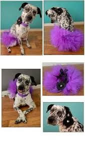 Image result for dog tutu