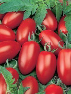 Timos Tomaten …