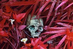 Richard Mosse_Of Lilies and Remains_Courtesy Edel