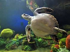▶ ♥♥ Giant Sea Turtles in Coral Reef (3 hours) - YouTube
