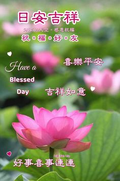 Good Day Wishes, How To Have A Good Morning, Have A Blessed Day, Chinese, Plants, Plant, Planets, Chinese Language