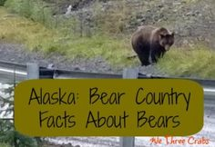 One thing that makes Alaska so special is that all three species of North American bears flourish here