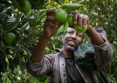 Als Priester verdient Mergeta Berhanu Hiluf umgerechnet 10 Franken im Monat. Seit ihm Land gegeben wurde und er Früchte anpflanzt, lebt seine fünfköpfige Familie im eigenen Haus. (Bild: Thomas Imo / Photothek)