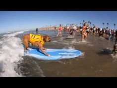 Pups Hang Ten in Surf City Surf Dog Competition, Southern California