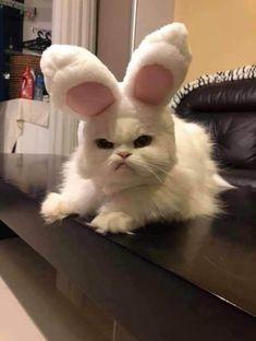 Cute Funny Pics, Cute Cat Memes, Cute Animal Memes, Cute Funny Animals, Funny Animal Pictures, Funny Cats, Pet Memes, Memes Humor, Funny Images