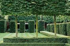 A green garden with hornbeam, cubed yew topiary and a low boxwood hedge. (Photo: Andrew Montgomery)