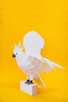 Colombian based artist Diana Beltran Herrera has been constructing the exotic bird sculptures, out of paper, since 2012.