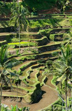 Rice Terracing, Bali, Indonesia
