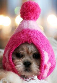 Omg so cute!!
