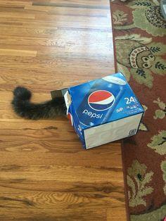The super rare Pepsi cat.