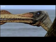 Walking with Dinosaurs - Giant of the Skies Part 1 HQ - BBC Prehistoric Dinosaurs, Prehistoric Creatures, Reptiles, Mammals, Bbc, Dinosaurs Series, Walking With Dinosaurs, Sky Walk, Evolutionary Biology