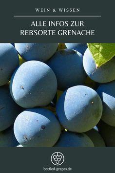In Spanien heißt sie Garnacha, in Katalonien Garnatxa. Auf Sardinien nennt man sie Cannonau, in der Toskana Alicante. Und in Frankreich eben Grenache. Erfahrt alles über die Rebsorte auf bottled-grapes.de! #wein #winzer #weinliebe #weiblog #rebsorte #grenache #garnacha Alicante, Day, Sardinia, Tuscany, Spain, France