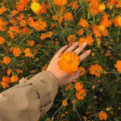 flowers, orange, and hand