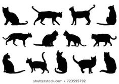 Find Cat Silhouette Vector Illustration stock images in HD and millions of other royalty-free stock photos, illustrations and vectors in the Shutterstock collection. Thousands of new, high-quality pictures added every day. Black Cat Silhouette, Silhouette Images, Silhouette Vector, Cat Outline Images, Outline Art, Gato Gif, Exotic Cats, Royalty Free Photos, Cat Art