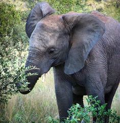 Hi baby elephant! Enjoy your lunch! Baby Elephant, Elephants, South Africa, Lunch, Animals, Elephant Baby, Animales, Animaux, Eat Lunch