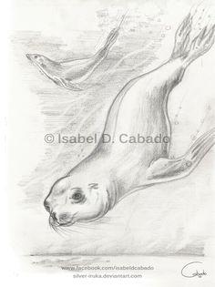 Sea Lions by Isabel D. Cabado http://silver-iruka.deviantart.com