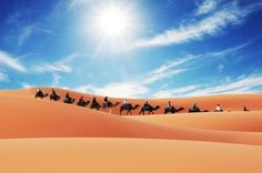 Merzouga Camel Trek for an Overnight in desert This camel trekking tour start in evening from Merzouga, crossing the Erg chebbi sand dunes by camels, it takes about 1:30mins to get to the camp, this tour includes camel each, dinner and breakfast, sand boarding.The camels will be packed with foods, blankets and everything else which is needed. The trek will start with an 1 hour and 30 minute ride by camel into the desert. The night will be in an equipped camp with music played ...