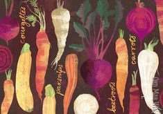 Beetroots carrots courgettes and parsnips. Autumn vegetables. Ohn Mar Win Illustration