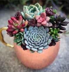Zimmerpflanzen organize succulents in numerous colours collectively crimson inexperienced black, Succulent Arrangements, Succulent Pots, Planting Succulents, Red Succulents, Succulents In Containers, Cactus Y Suculentas, Cactus Flower, Echeveria, Houseplants