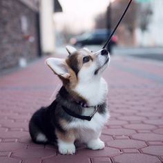 Look at those tiny legs.
