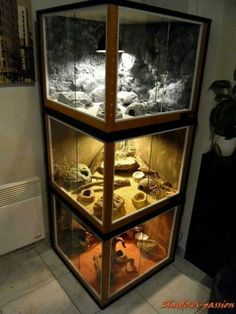 Beautiful DIY Glass Terrarium Ideas (A Guide on How to Make Terrarium & Maintena. - Beautiful DIY Glass Terrarium Ideas (A Guide on How to Make Terrarium & Maintenance) - Reptile Cage, Reptile Habitat, Reptile House, Reptile Room, Reptile Tanks, Tarantula Habitat, Lizard Habitat, Reptile Pets, Terrarium Serpent