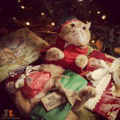 Smiling is my favorite!  #exoticshorthair #cat #cute #flatface #kitten #meow #pet #mreggs #catlover #exoticsofinstagram #smushface #weeklyfluff #sirpumpkin  #uglysweaterparty #graphicdesign  #bird #dreambig