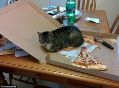 Still want a slice? This cat got back at its owner after being left out of the pizza delivery