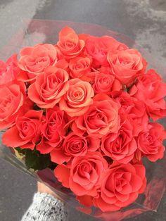 summer roses.