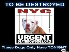 Tonight's list has been posted and there are 6 dogs At Risk.  Please share! - - Info  Please Share:   PLEASE START SHARING!!! Please Share: -  Click for info & Current Status: http://nycdogs.urgentpodr.org/to-be-destroyed/