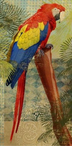 parrot art by Phoenix Creative