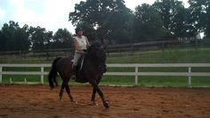"""How is your counter canter doing? Are you able to keep your horse in balance as you ride it? What did you learn about the counter canter after watching this video?"