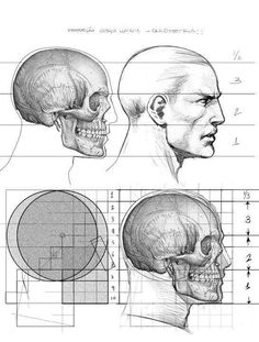 Anatomy Drawing Tutorial Alexandre Jubran - support his book, worths every penny. Head Anatomy, Human Anatomy Drawing, Anatomy Study, Anatomy Art, Male Figure Drawing, Figure Drawing Reference, Anatomy Reference, Arte Com Grey's Anatomy, Drawing Heads