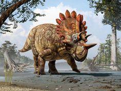 A right royal member of the Ceratopsidae - wonderful illustration of Regaliceratops peterhewsi by Julius Csotonyi.