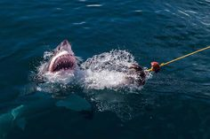 12 Badass Adventures for Your Next Great Escape | Cage Diving in South Africa | FATHOM