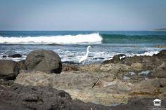 alltroncones alltroncones alltroncones alltroncones #Troncones #Ixtapa #Zihuatanejo #Guerrero #Mexico #playa #vacaciones #alltroncones #surf #surfers #Photography #nature #ocean #playatroncones #tronconesbeach #Tours #ecoturism #ecoturismo #beachtours #surflessons #turtle #turtlerelease #holidays #birds #birdswatching #birdsphoto #manzanillo #manzanillobay #bay #despertar #despierta #conciencia