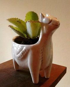 Maceta llama de cerámica, ceramics