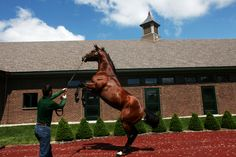 Brian Crowley, a handler, walks Gemologist in front of the stallion barn at Winstar Farm. Each stall has a 5-foot-wide door to address the horses' pet peeve: narrow spaces. A standard human-size door is along the back wall, functioning as both a window and an emergency exit to the outside.